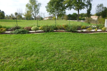 Grass seedlings
